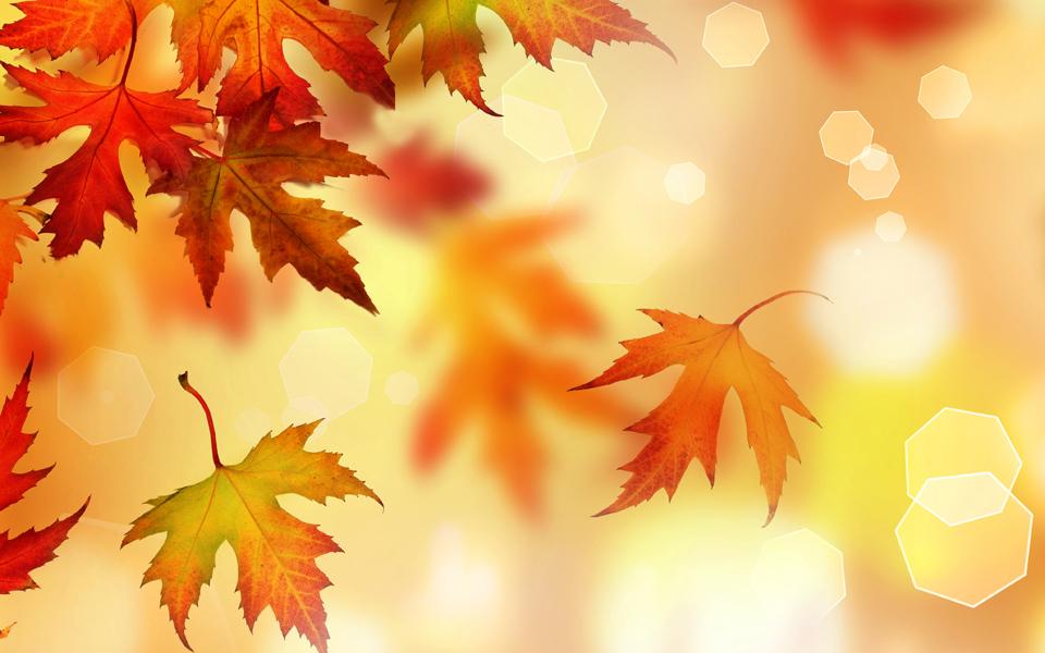 fall4_2014